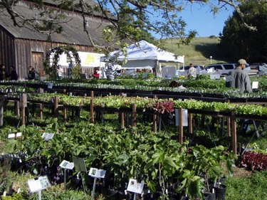 Flower Sale on Will Be On Sale At The Annual Ucsc Farm And Garden Spring Plant Sale