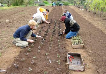 casfs-planting-350.jpg