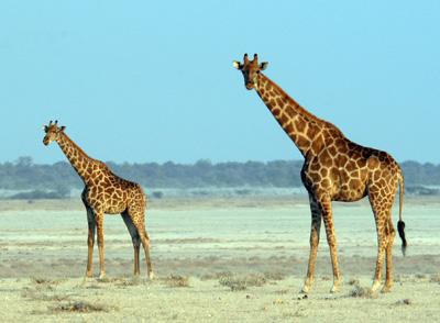 Terrestrial Mammals Share 56