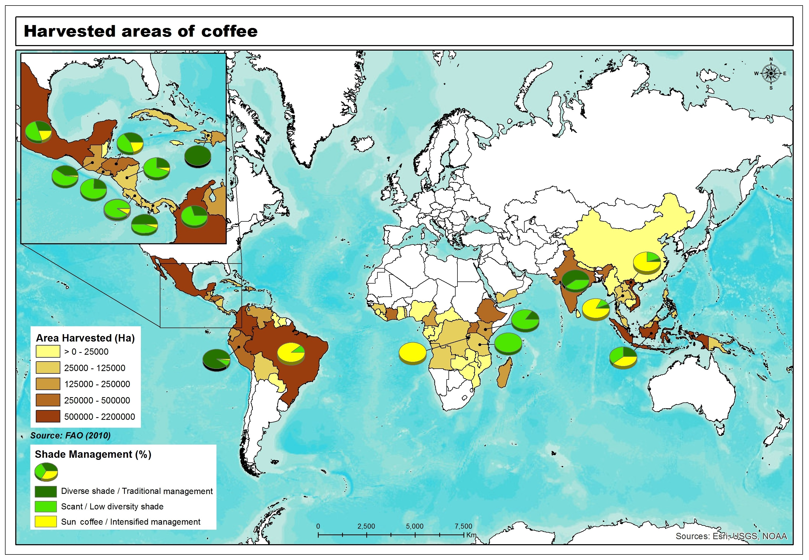 How coffee is grown 9