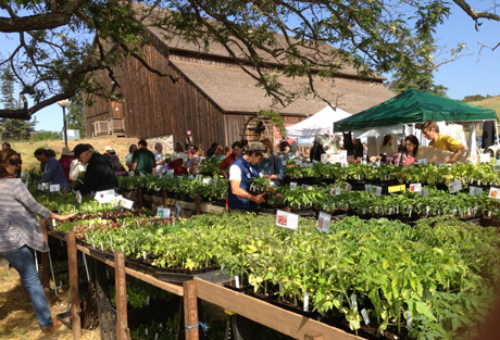 Ucsc Farm Garden S 35th Annual Spring Plant Sale Set For
