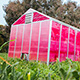 magenta greenhouse in green field