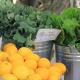 produce market cart