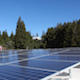 Solar panels and redwood trees