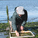Eelgrass monitoring at Elkhorn Slough