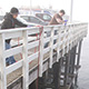 researchers collect samples from wharf