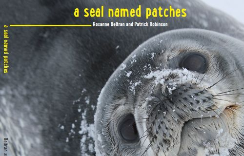A Seal Named Patches cover