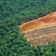 aerial view of logging in tropical forests