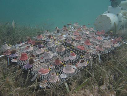 coral-transplants-410.jpg