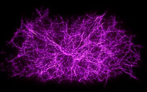 cosmic-web-500.jpg