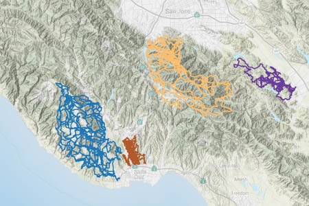 Color-coded GPS tracks for four pumas in the Santa Cruz mountains