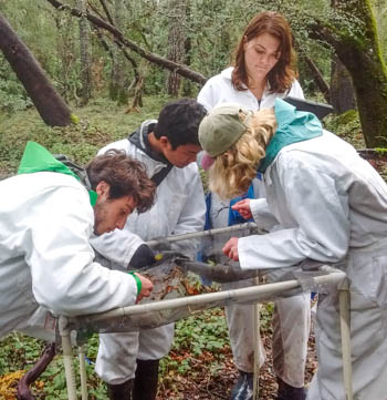 Student interns in the forest count seeds inside a mesh basket.