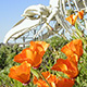 poppies and whale skeleton