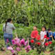 children in a garden surrounded by rows of corn and flowers