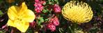 Arboretum holds annual Sprint Plant Sale