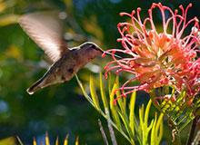hummingbird hovering near flower
