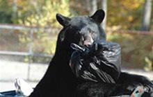 Yosemite Bears' diets