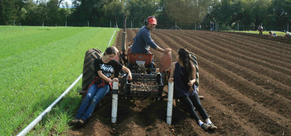 Undergraduate interns plant potatoes with Darryl Wong, a UCSC farm manager.