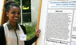 Undergraduates exhibit summer research projects