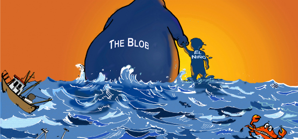 The Blob and El Niño are heading out, leaving behind a disrupted ecosystem.