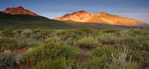 Valentine Eastern Sierra Reserve, one of 39 UC Natural Reserves  in California.