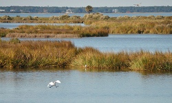 Coastal wetlands help prevent flood damage