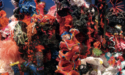 Crochet coral reef exhibition opening soon