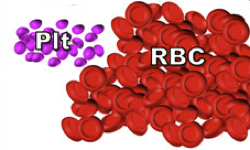 Study offers insights on red blood cell production