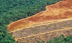 Deforestation may increase local surface temperatures